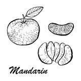 Ilustração tirada mão do mandarino Alimento detalhado do vegetariano Coleção dos elementos para o projeto Fotografia de Stock Royalty Free
