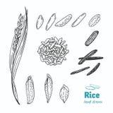 Ilustração tirada mão do vetor do arroz ilustração do vetor