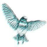 Ilustração tirada mão do vetor do estilo do pássaro Imagem de Stock