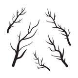 Ilustração tirada mão do vetor dos ramos Ícones no fundo transparente Imagem de Stock