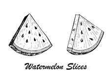 Ilustração tirada mão do vetor - fatias da melancia Ilustração botânica do alimento Imagem de Stock Royalty Free