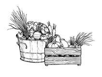 Ilustração tirada mão do vetor - legumes frescos supermarket ilustração stock