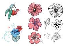 Ilustração tropical com flores e bagas, hibiscus, lichi ilustração stock