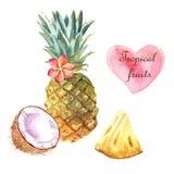 Ilustração tropical da aquarela com abacaxi e coco no fundo branco ilustração royalty free