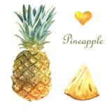 Ilustração tropical da aquarela com abacaxi em um fundo branco ilustração stock