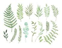 Ilustrações da aquarela do vetor Clipart botânico Grupo de verde ilustração do vetor