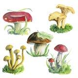 Ilustrações da aquarela dos cogumelos Fotografia de Stock