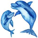 Ilustrações da aquarela, golfinhos azuis engraçados, mamã e bebê isolados no fundo branco fotografia de stock royalty free