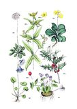 Ilustrações da planta fotografia de stock royalty free