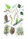 Ilustrações da planta Imagens de Stock