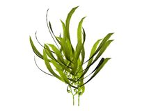 Ilustrações da planta Fotos de Stock