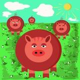Ilustrações de porcos engraçados Fotos de Stock Royalty Free