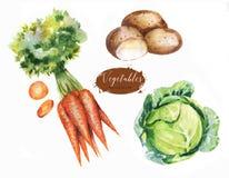 Ilustrações desenhados à mão do alimento da aquarela Fotografia de Stock