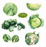 Ilustrações desenhados à mão do alimento da aquarela Imagem de Stock