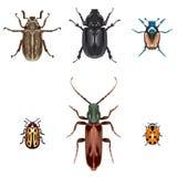 Ilustrações do besouro Fotografia de Stock