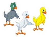 Ilustrações do vetor dos desenhos animados dos pássaros Imagem de Stock