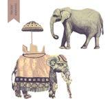 Ilustrações dos elefantes indianos ajustadas Isolado no branco Vetor Imagem de Stock Royalty Free
