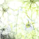 Ilustrações esboçadas florais abstratas desvanecidas do fundo do Grunge da aquarela Imagens de Stock Royalty Free