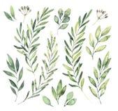Ilustrações tiradas mão da aquarela Clipart botânico Grupo de g ilustração stock