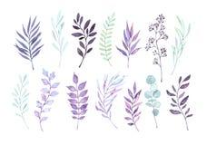 Ilustrações tiradas mão da aquarela Clipart de Autumn Botanical S ilustração royalty free