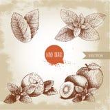 Ilustrações tiradas mão da hortelã do estilo do esboço ajustadas As folhas da hortelã, o limão ou o fruto do cal com pastilha de  Imagem de Stock