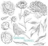 Ilustrações tiradas mão da tinta de peônias ornamentado ilustração do vetor