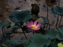 Ilustra??o do zen da flor dos l?tus imagem de stock royalty free