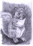 Ilustra??o-Esquilo Ilustração Royalty Free