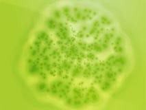 Ilustración bacteriana del crecimiento de la célula Fotografía de archivo libre de regalías