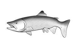 Ilustración con estilo de los pescados de color salmón Foto de archivo libre de regalías