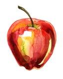 Ilustración de la acuarela de Apple Imagen de archivo libre de regalías