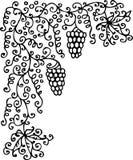 Ilustración de la vid Imagen de archivo libre de regalías