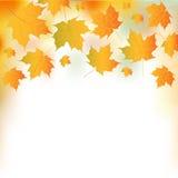 Ilustración de las hojas de otoño Fotografía de archivo