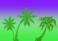 Ilustración de las palmas Fotografía de archivo libre de regalías
