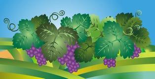 Ilustración de las uvas Foto de archivo