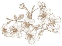 Ilustración de los flores de cereza stock de ilustración