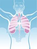 Ilustración de los pulmones Imágenes de archivo libres de regalías