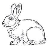 Ilustración de un conejo Imagen de archivo