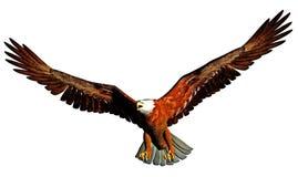 Ilustración del águila Foto de archivo libre de regalías