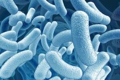 Ilustración del bacilo microorganismos Fotos de archivo libres de regalías