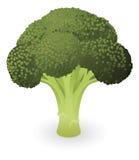 Ilustración del bróculi ilustración del vector