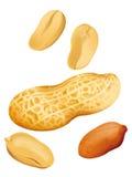 Ilustración del cacahuete Fotos de archivo