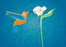Ilustración del colibrí Fotografía de archivo