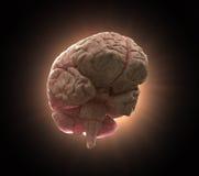 Ilustración del concepto del cerebro humano Imagen de archivo libre de regalías