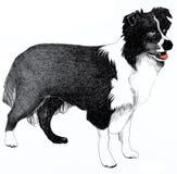 Ilustración del perro del collie Foto de archivo libre de regalías