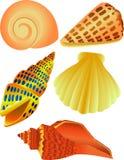 Ilustración del shell del mar Foto de archivo libre de regalías