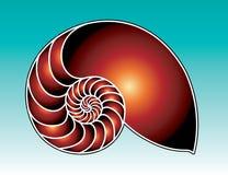 Ilustración del shell del nautilus