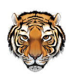 Ilustración del tigre Imagen de archivo