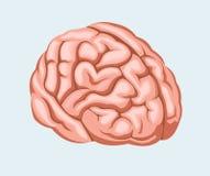 Ilustración del vector Cerebro humano Fotos de archivo libres de regalías