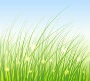 Ilustración del vector de la hierba verde Imagenes de archivo
